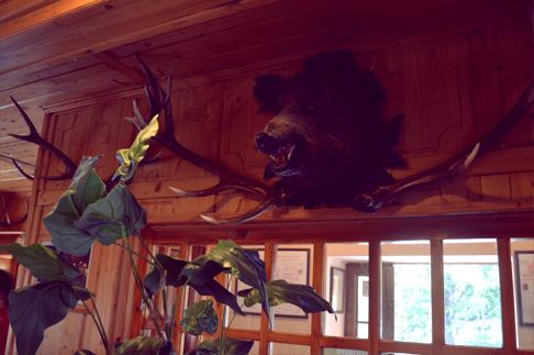 3-woodland-hike-cottage-boar