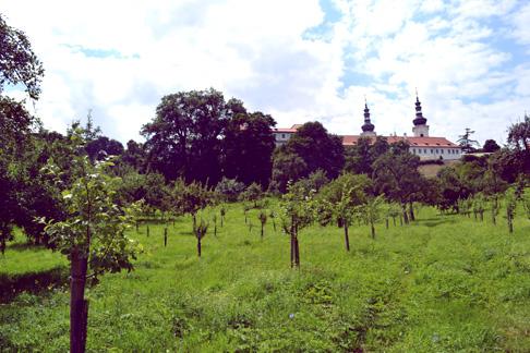 Travel Expat China Blog: Picnic Spot in Prague Orchard